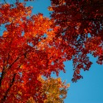 Fall_colors_Huntsville_2004-10-1187