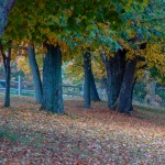 Fall_colors_Owen_Sound_2004-10-1511