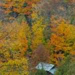 Fall_colors_Owen_Sound_2004-10-1510
