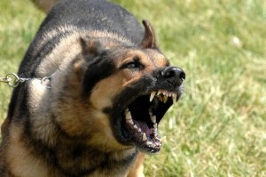 Military_dog_barking