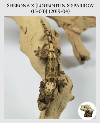 (1) Sherona x [Louboutin x Sparrow (15-03)] (2019-04)