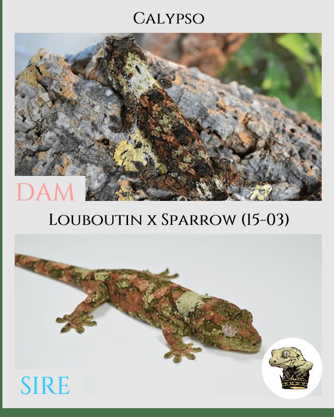 (2) Calypso & [Louboutin x Sparrow (15-03)] Parent Pics