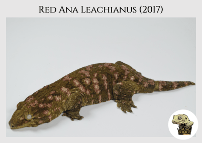 (2) Red Ana Leachianus (2017) (2019-08-05)