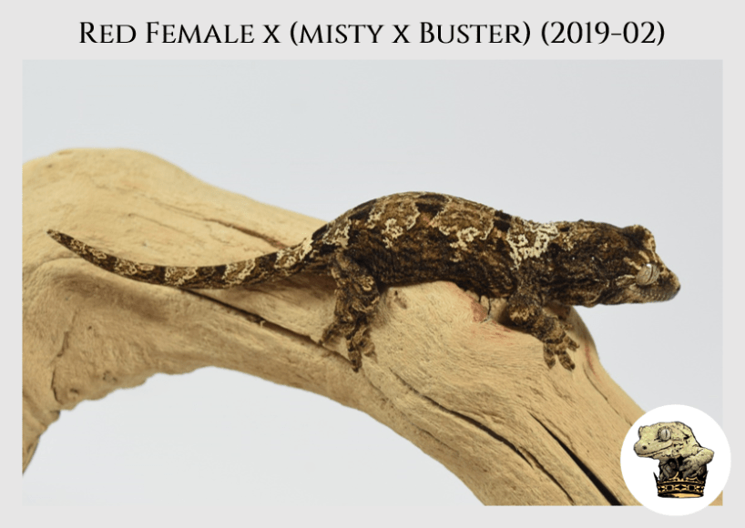 (3) Red Female x [Misty x Buster] (2019-02)