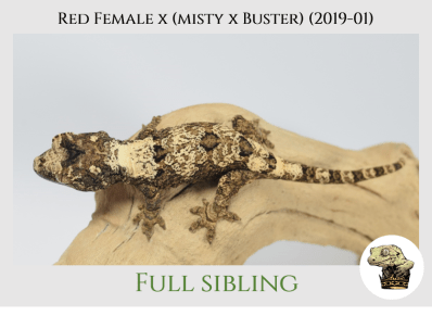 (5) Red Female x [Misty x Buster] (2019-01)