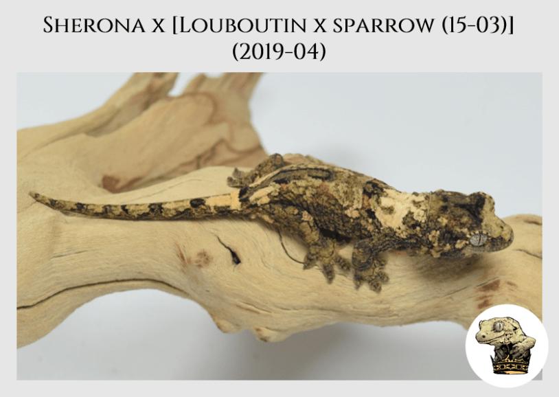 (5) Sherona x [Louboutin x Sparrow (15-03)] (2019-04)