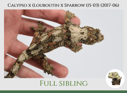 (7) Calypso x [Louboutin x Sparrow (15-03)] (2017-06)