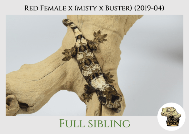 (7) Red Female x [Misty x Buster] (2019-04)