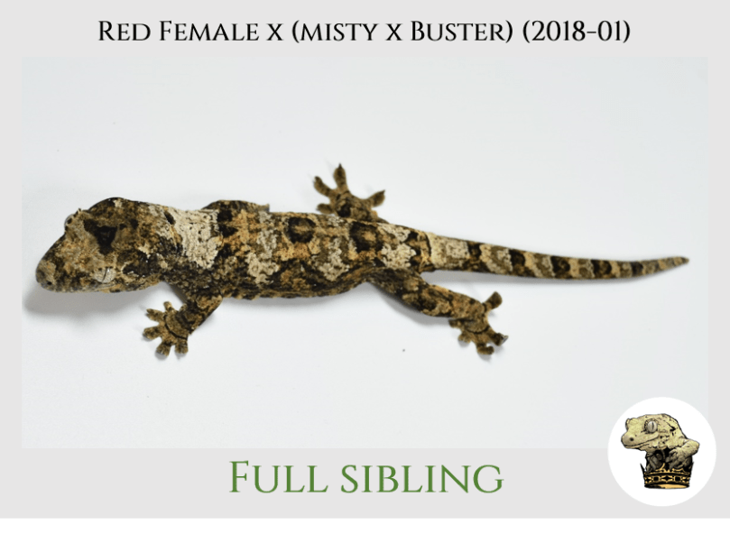 (8) Red Female x [Misty x Buster] (2019-04)