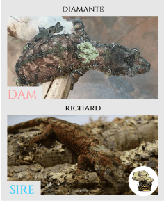 Diamante x Richard - Parent Pics