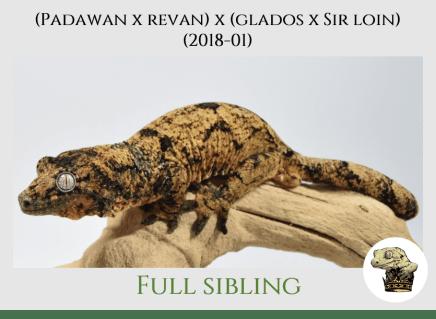 PR (2018-01) - Sibling Pic