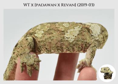 WT (2019-03) WM (2020-05-11) (3)