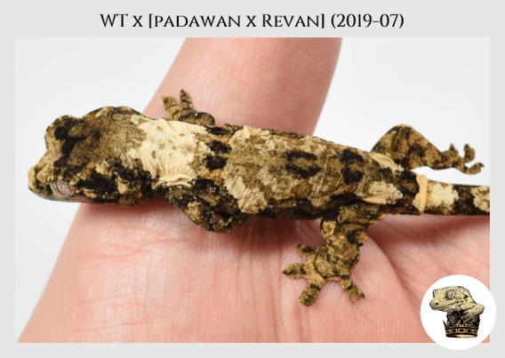 White Trash x (Padawan x Revan) (2019-07) (2019-11-24) WM (2)