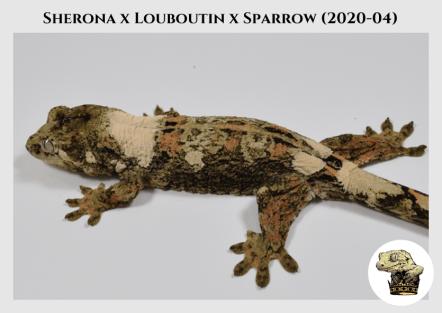 2 - Sherona (2020-04) WM