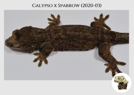 Calypso (2020-03) (2021-01-27) WM (2)