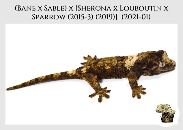 Bane x Sable (2021-01) (2021-05-29) WM (2)