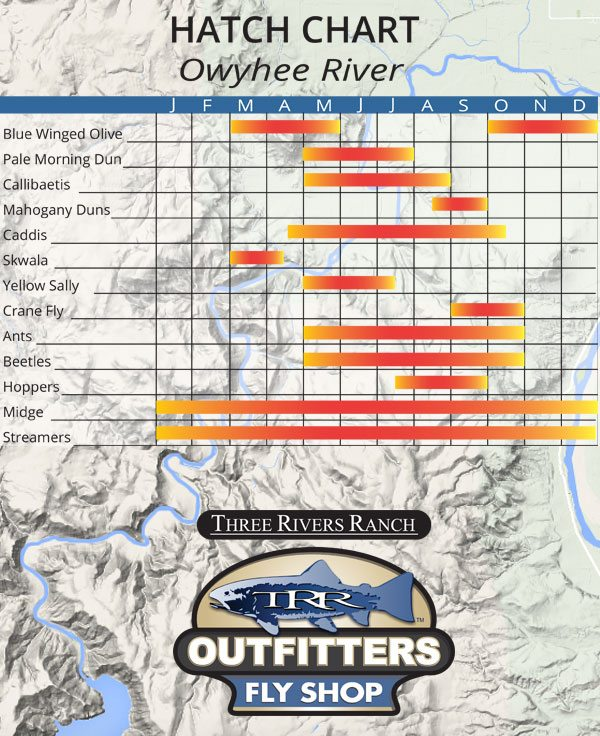 Owyhee River Hatch Chart - Fly Fishing Oregon