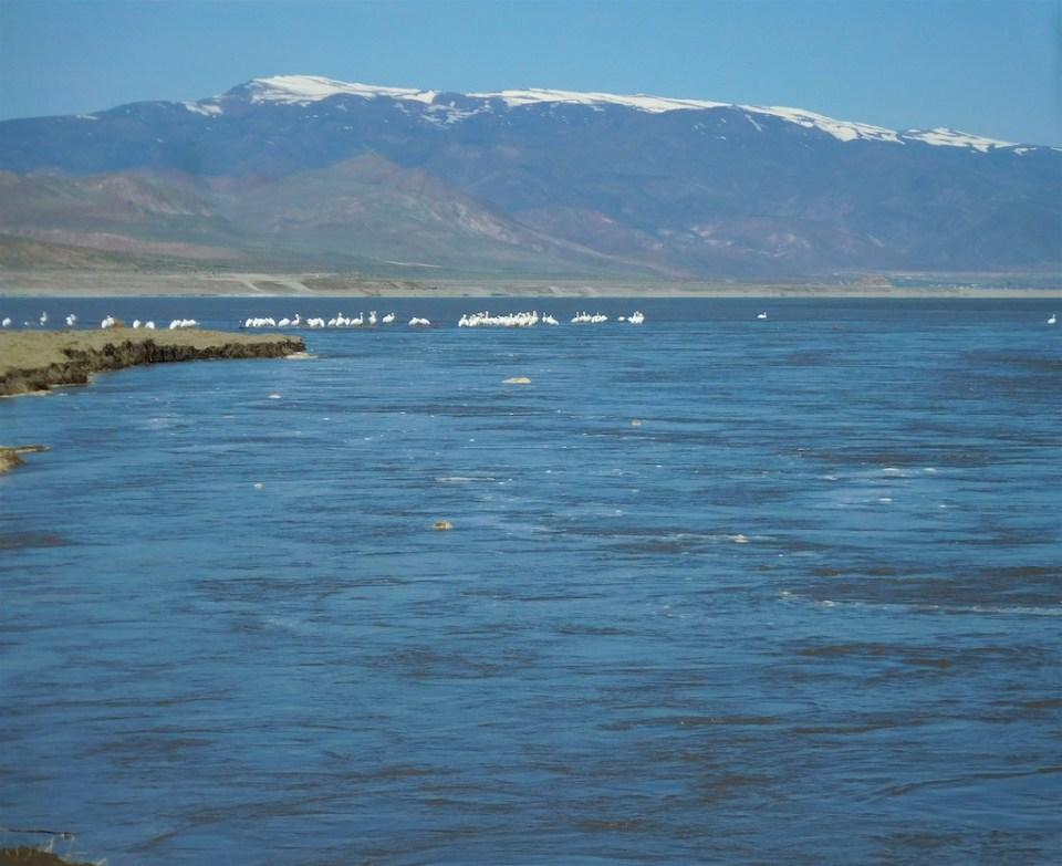 Truckee River flows at Pyramid Lake are hitting 5,000 CFS April 20, 2017.