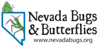 Nevada Bugs and Butterflies