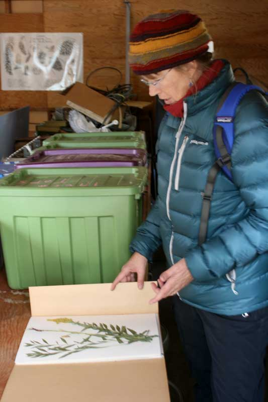 Kaitlin Backlund shows a plant sample that researchers have preserved at Sagehen Creek Field Station. Feb. 5, 2015.
