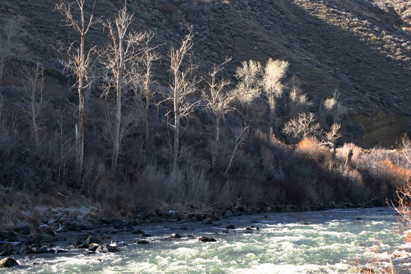Plenty of water in the Truckee River channel at Mayberry Park on Feb. 20. 2015.