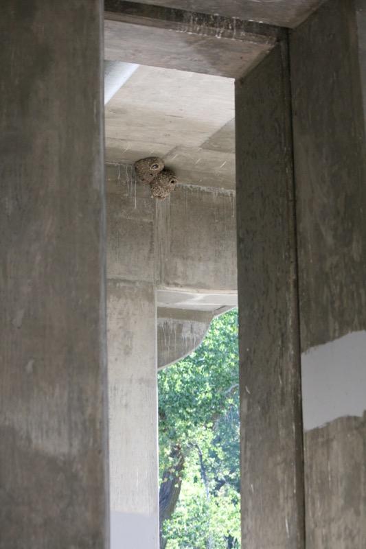 Cliff swallow nests under the bridge in Crystal Peak Park, Verdi. July 28, 2015.