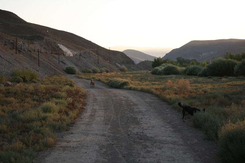 Early morning on the trail at Mustang Ranch, 6 Aug 2015.