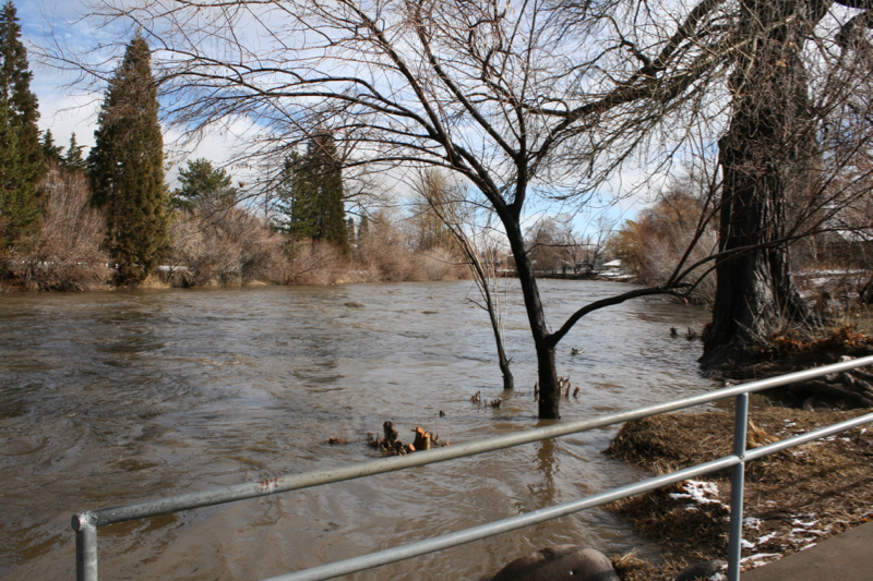 High water in Crissie Caughlin Park, Jan 30, 2016.