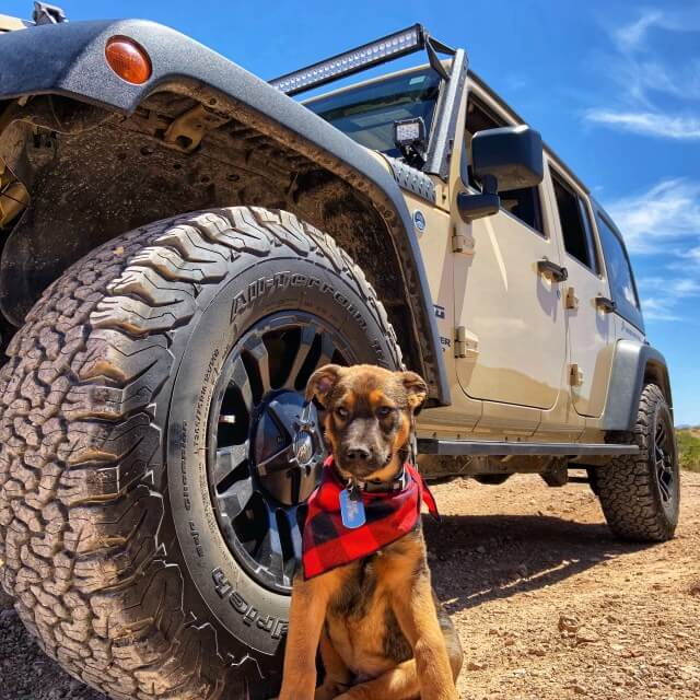 Brown dog wearing red bandana sits next to tire of a Jeep.