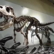 Esqueletos de dinosaurios en el Museo de Ciencias Naturales de Madrid