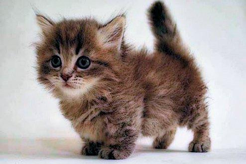 Regalar gatitos