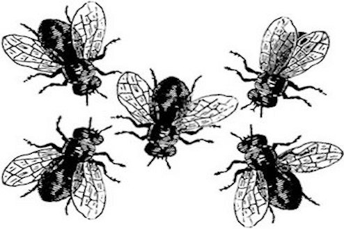 Deshacerte de moscas