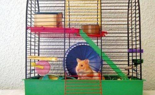 Higiene de roedores