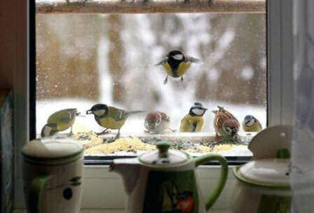 Pájaros en la ventana