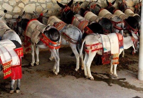 burros-2532421_1280