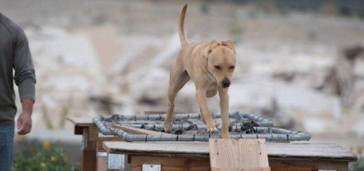 Aldo went through rigorous training to pass his certification. (Mountain View K9 Photos)