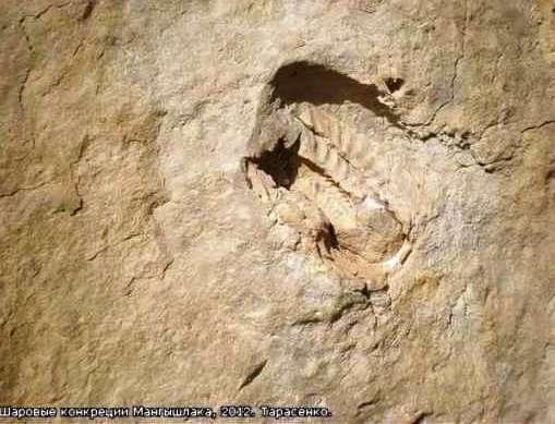 uhlíkové datovania dinosaurie kosti