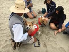 corgi_beach_day_18