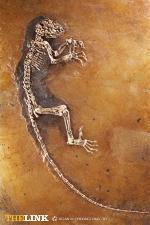 Ida_skeleton