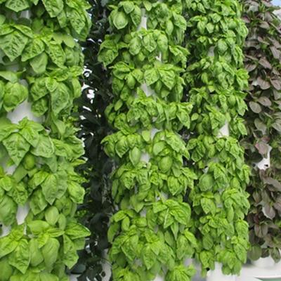 Tower Garden Basil & Aeroponic Basil