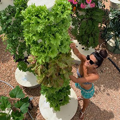 True Garden & Agrotonomy Offer Tower Farms Worldwide