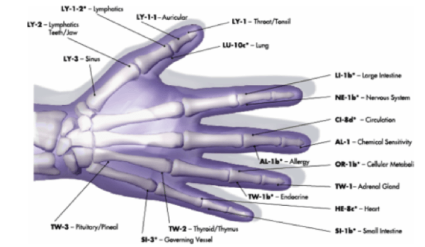 Image showing various meridian points on the hand that connect to various body organs