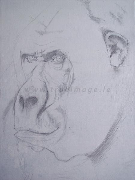 gorilla painting - wildlife art