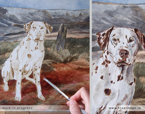 Dalmatian pet portrait in acrylic on canvas - progress image 2