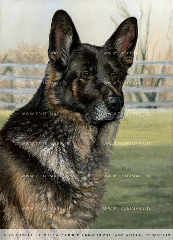 german shepherd portrait in acrylic on canvas