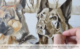 two german shepherds portrait in progress