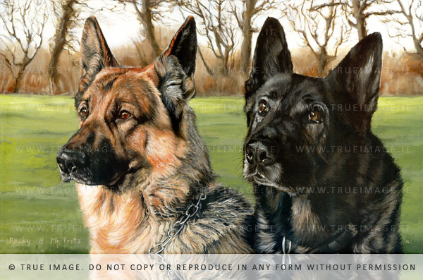 two german shepherds portrait