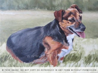 small dog portrait painting - work in progress 5