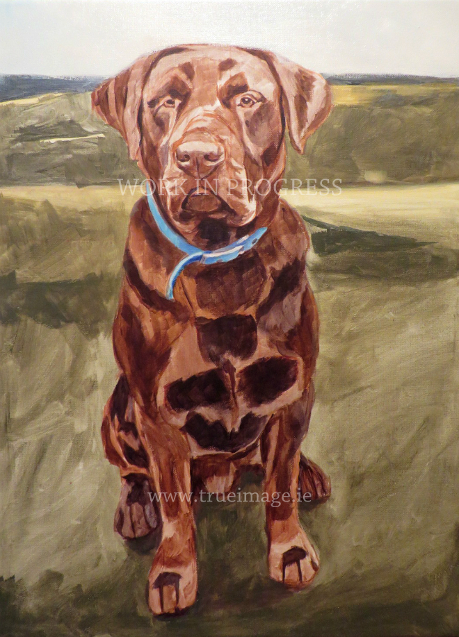 chocolate labrador portrait work in progress