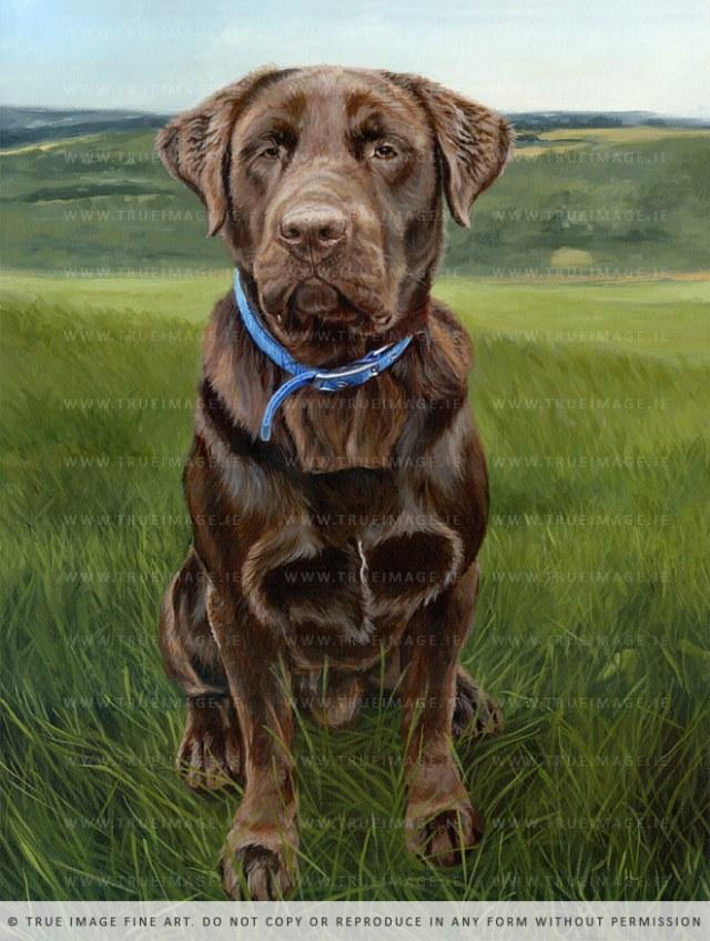 chocolate labrador painting